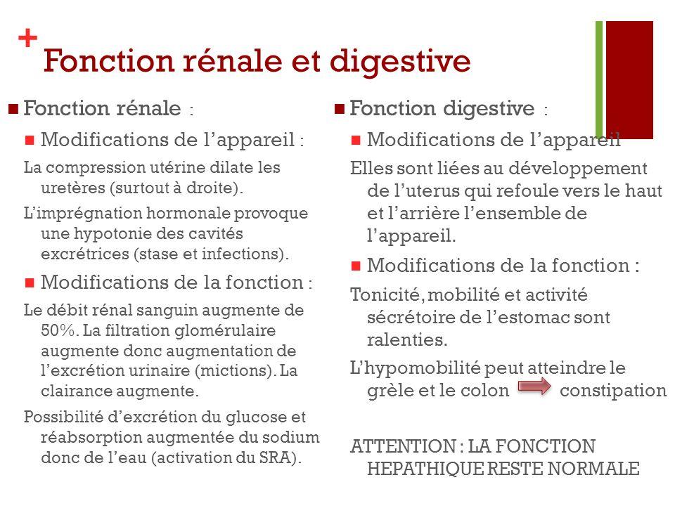 Fonction rénale et digestive