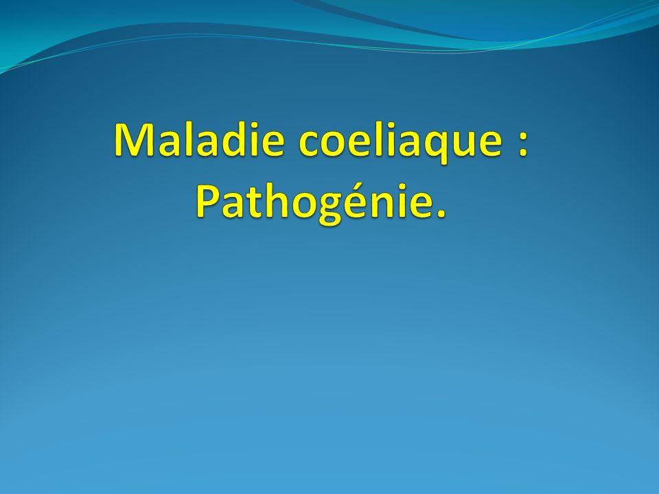 Maladie coeliaque : Pathogénie.