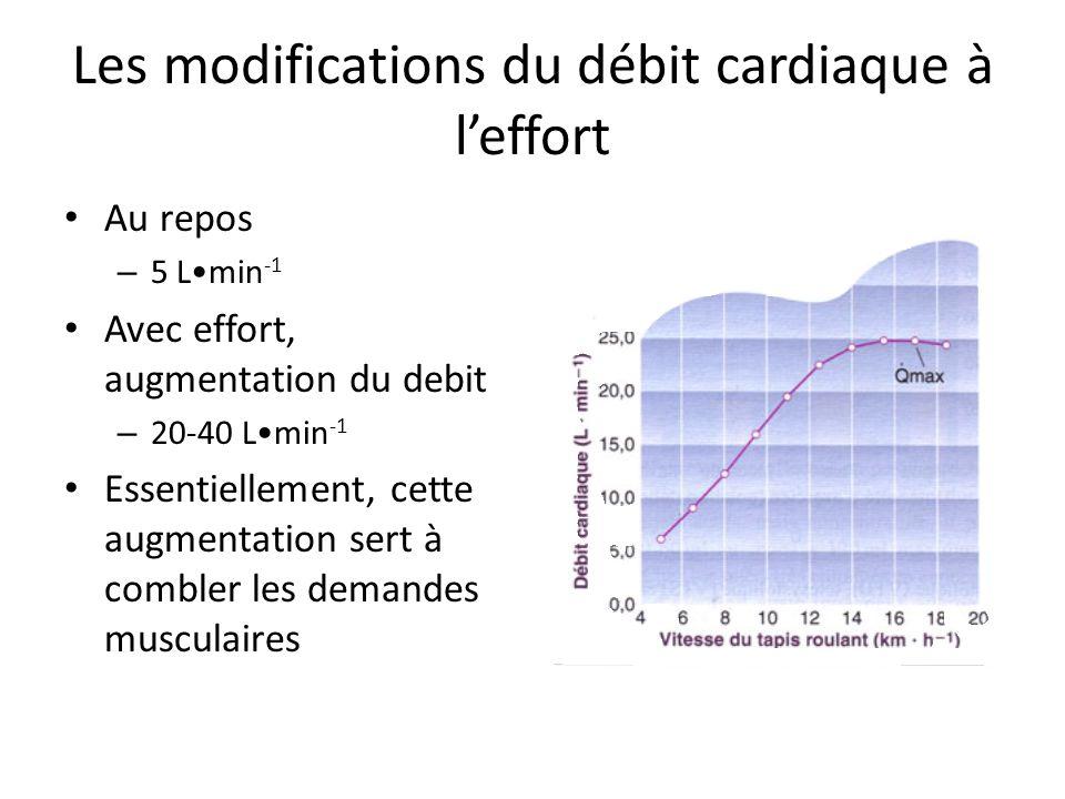 Les modifications du débit cardiaque à l'effort