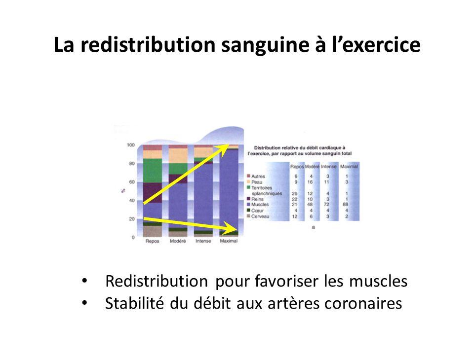 La redistribution sanguine à l'exercice