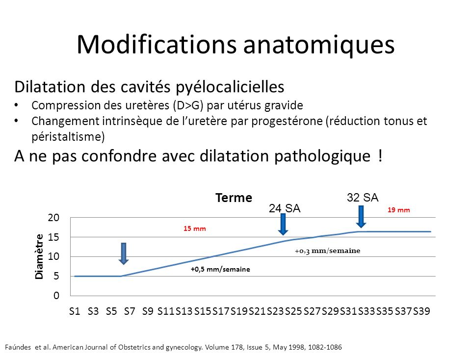 Modifications anatomiques