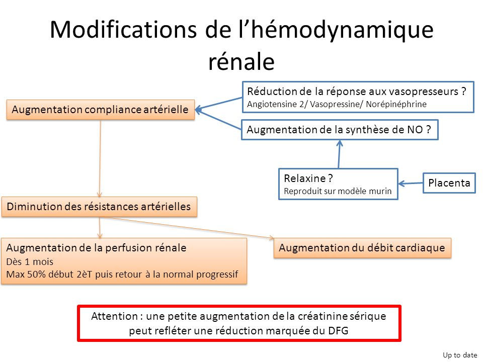 Modifications de l'hémodynamique rénale