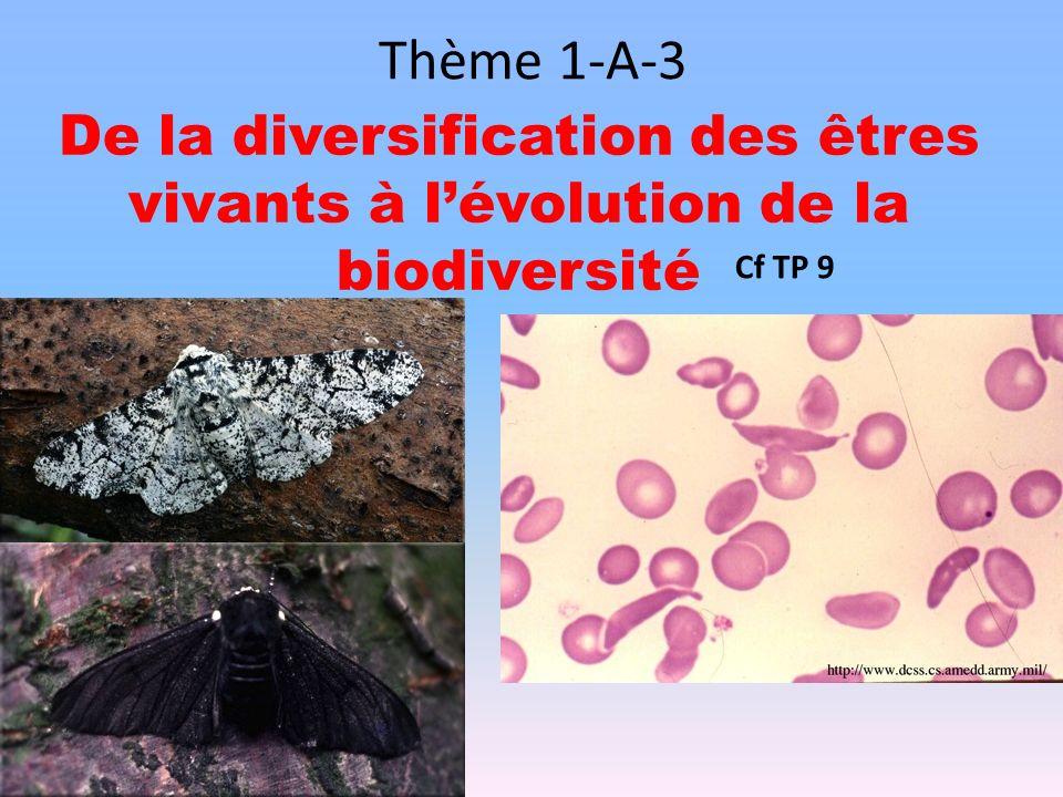 Thème 1-A-3 De la diversification des êtres vivants à l'évolution de la biodiversité Cf TP 9