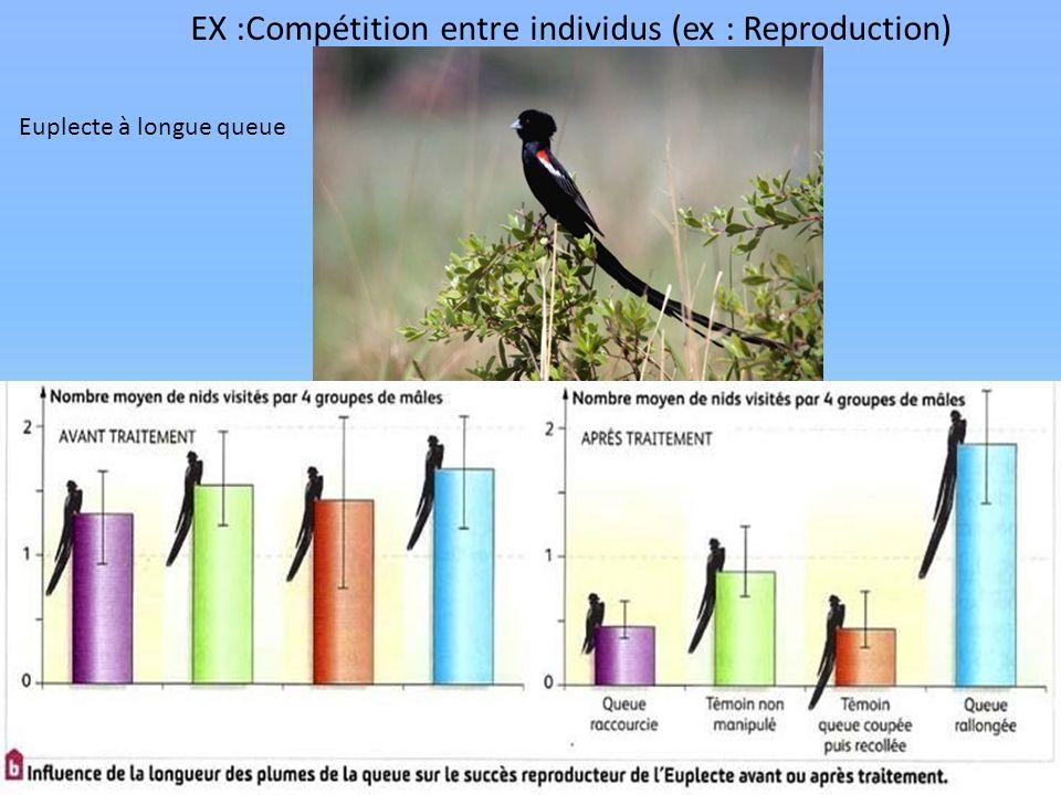 EX :Compétition entre individus (ex : Reproduction)