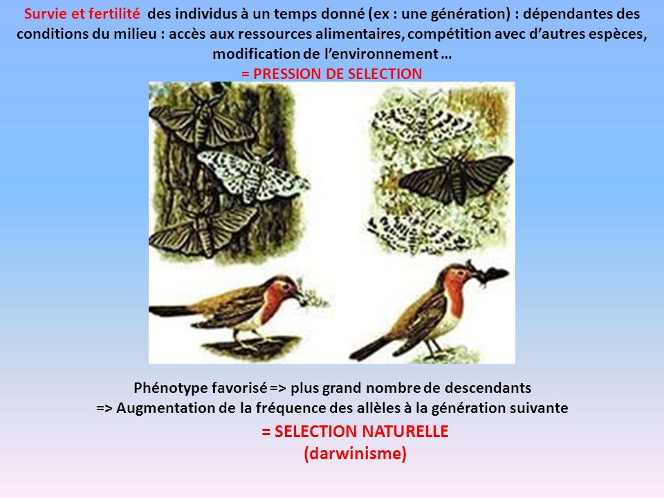 = SELECTION NATURELLE (darwinisme)
