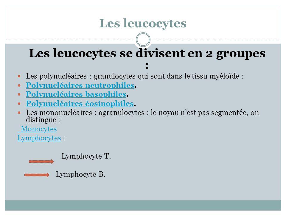 Les leucocytes se divisent en 2 groupes :