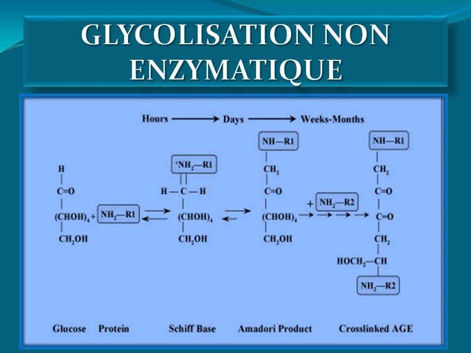 GLYCOLISATION NON ENZYMATIQUE