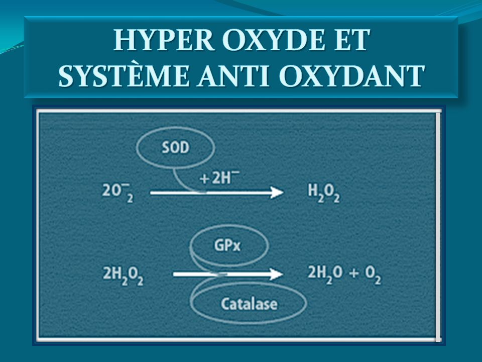 HYPER OXYDE ET SYSTÈME ANTI OXYDANT