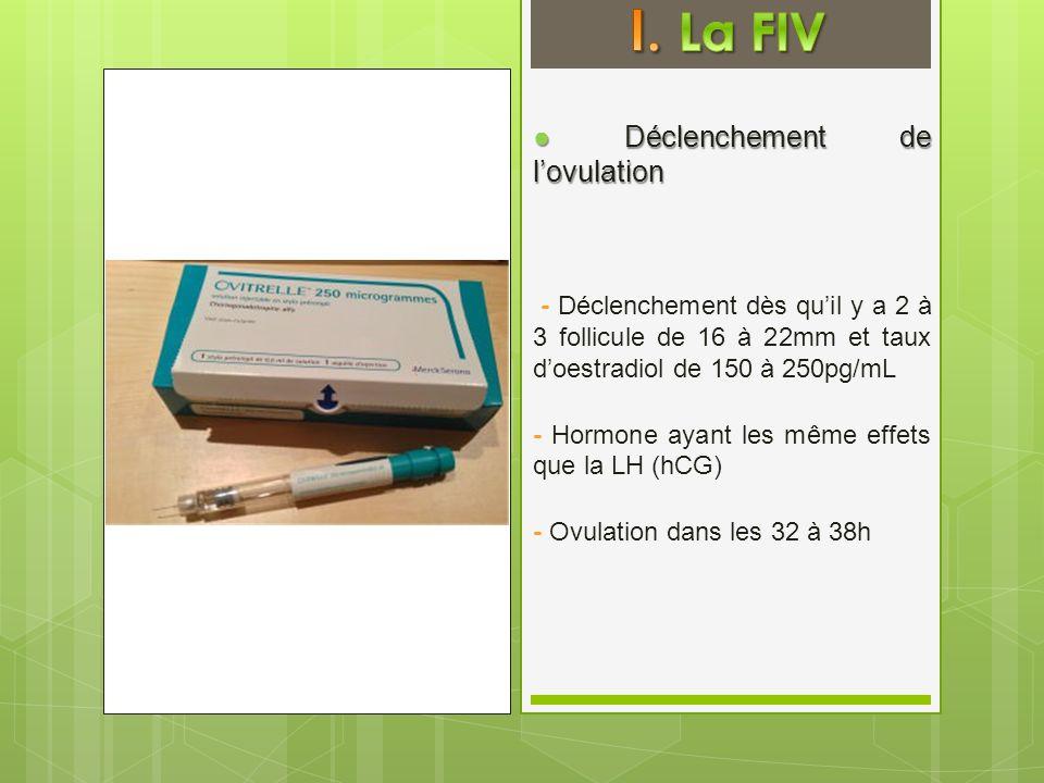 I. La FIV ● Déclenchement de l'ovulation
