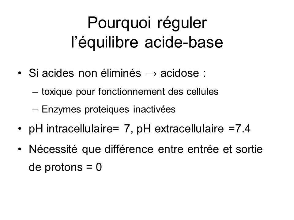 Pourquoi réguler l'équilibre acide-base