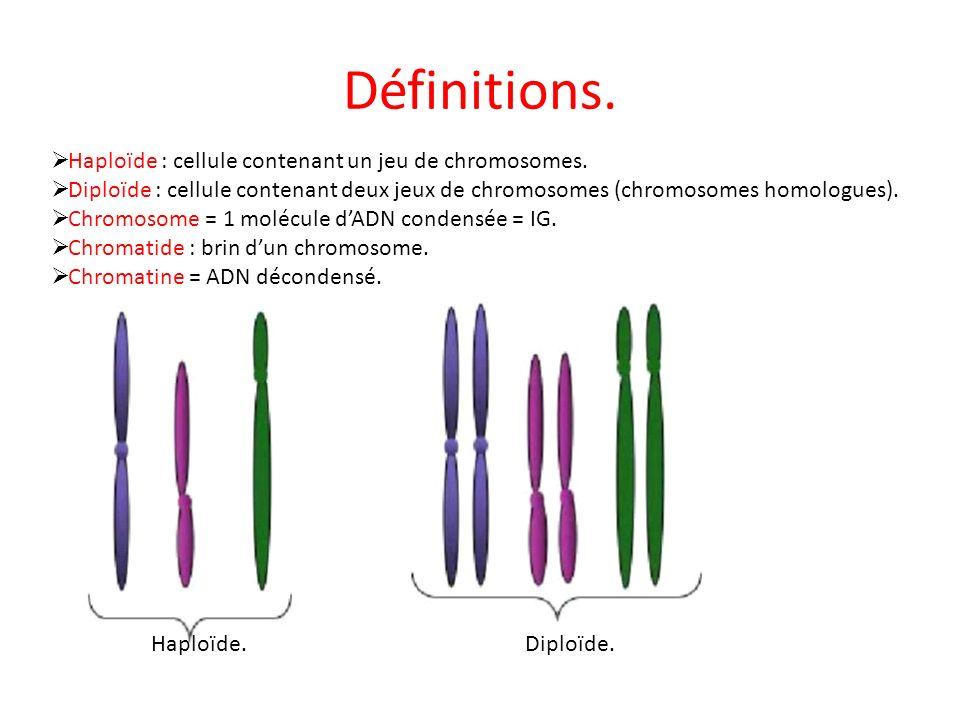 Définitions. Haploïde : cellule contenant un jeu de chromosomes.