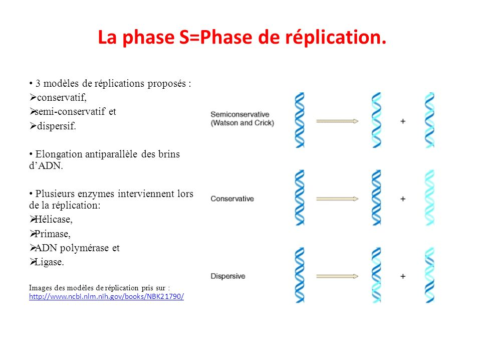 La phase S=Phase de réplication.