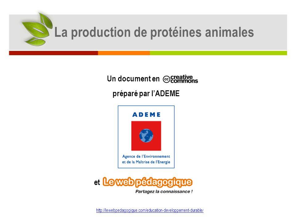 La production de protéines animales