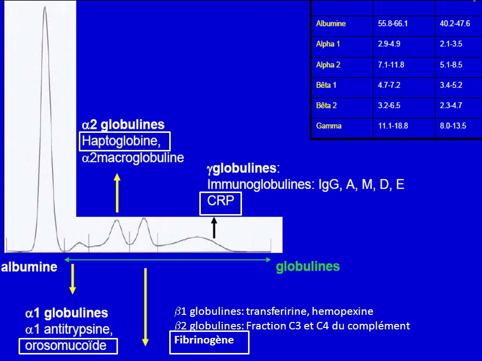 1 globulines: transferirine, hemopexine
