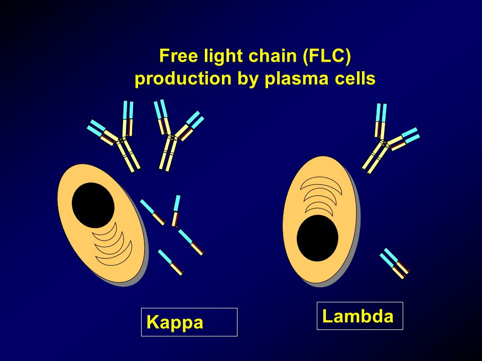 Free light chain (FLC) production by plasma cells