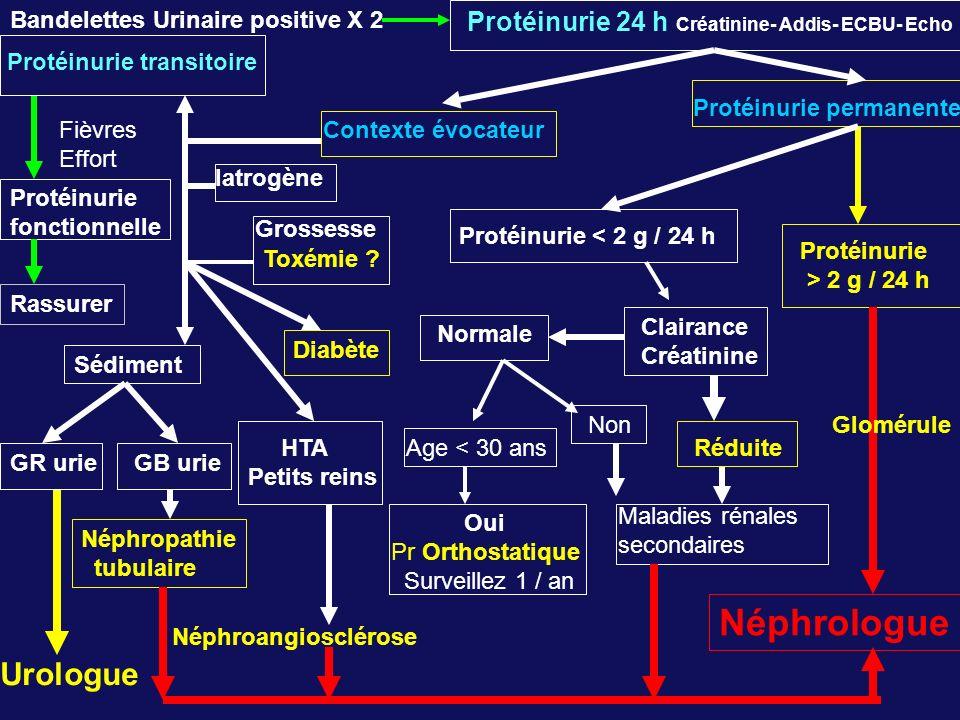 Néphrologue Urologue Protéinurie 24 h Créatinine- Addis- ECBU- Echo