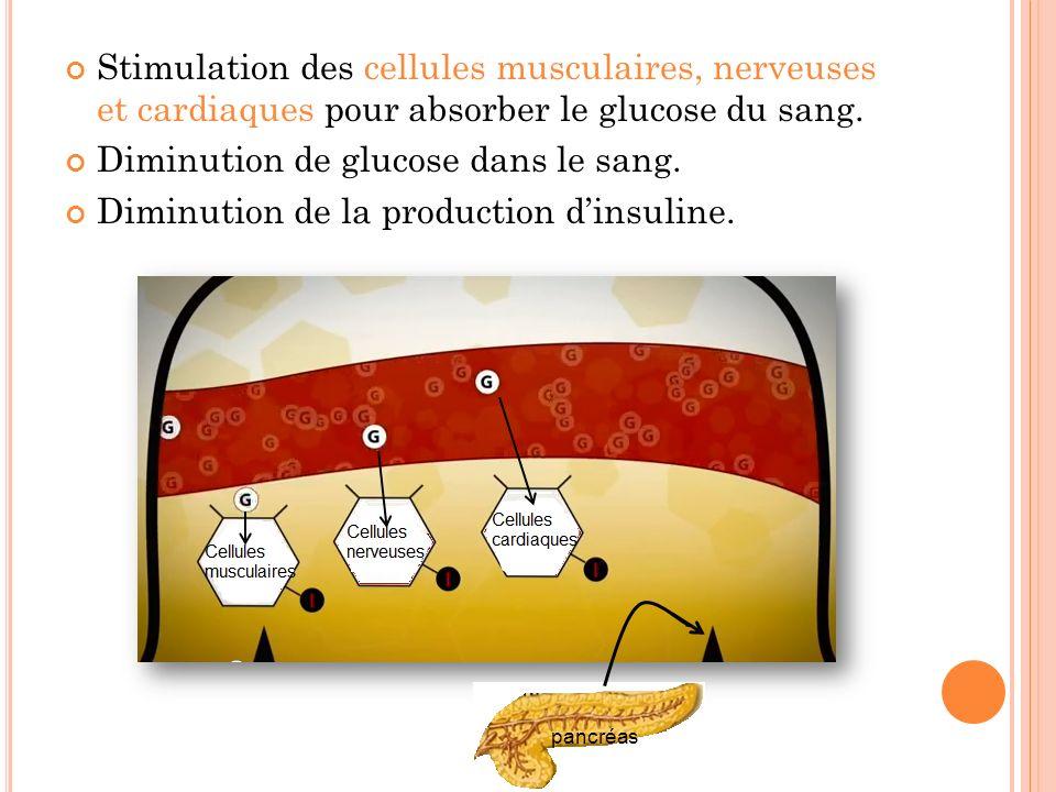 Diminution de glucose dans le sang.