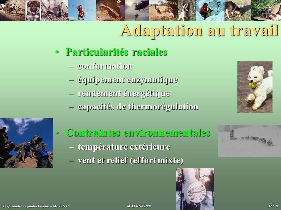 Adaptation au travail Particularités raciales