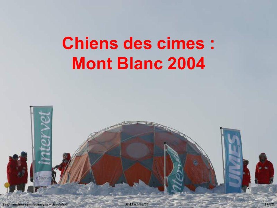 Chiens des cimes : Mont Blanc 2004