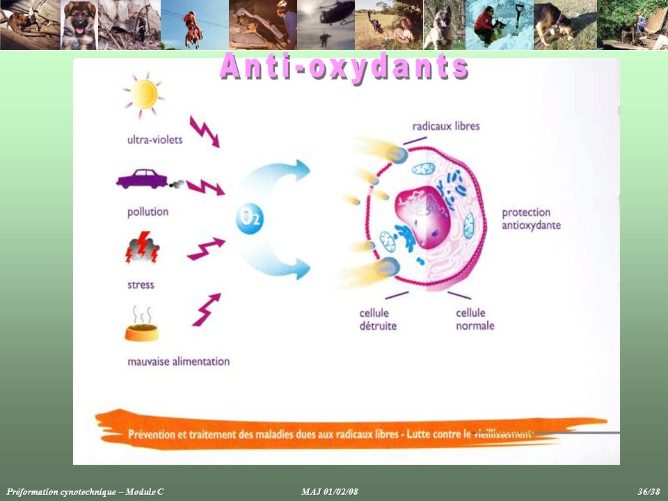 Anti-oxydants Préformation cynotechnique – Module C MAJ 01/02/08 36/38.