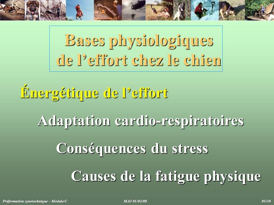 Bases physiologiques de l'effort chez le chien