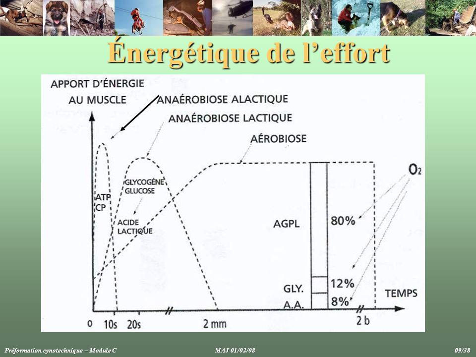 Énergétique de l'effort