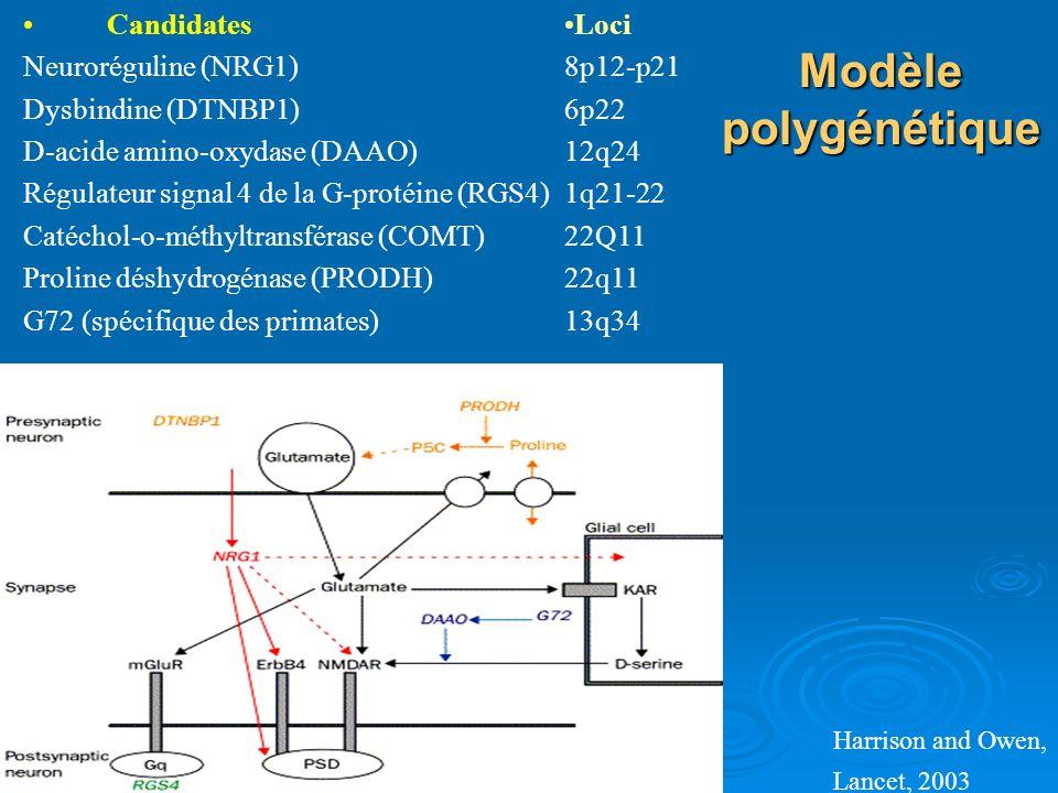 Modèle polygénétique Candidates Neuroréguline (NRG1)