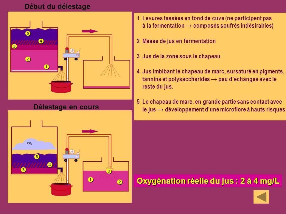 Oxygénation réelle du jus : 2 à 4 mg/L