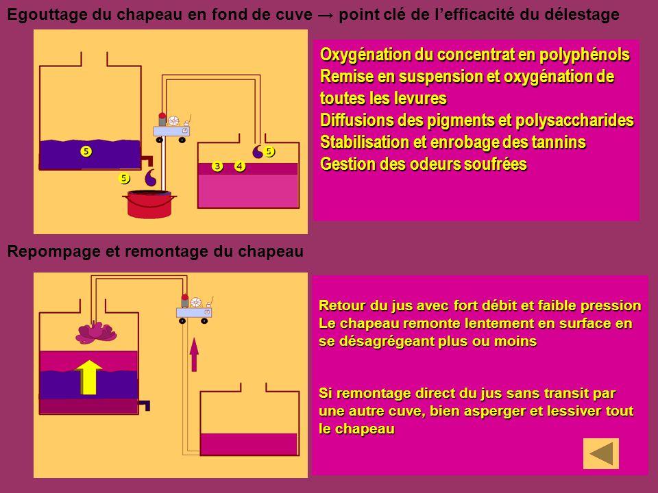 Oxygénation du concentrat en polyphénols