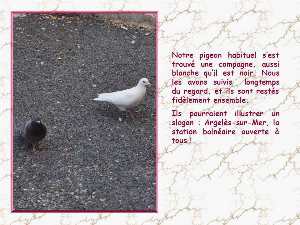 Notre pigeon habituel s'est trouvé une compagne, aussi blanche qu'il est noir. Nous les avons suivis longtemps du regard, et ils sont restés fidèlement ensemble.