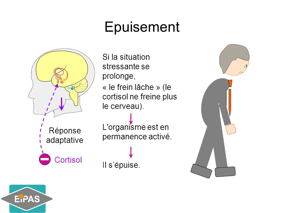 Epuisement Si la situation stressante se prolonge,