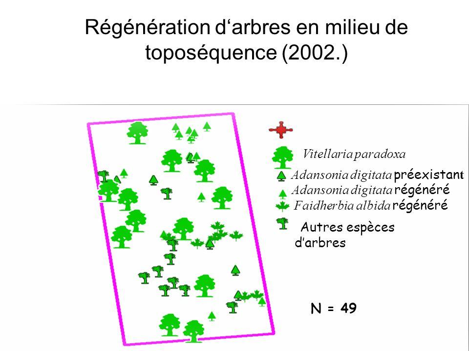 Régénération d'arbres en milieu de toposéquence (2002.)