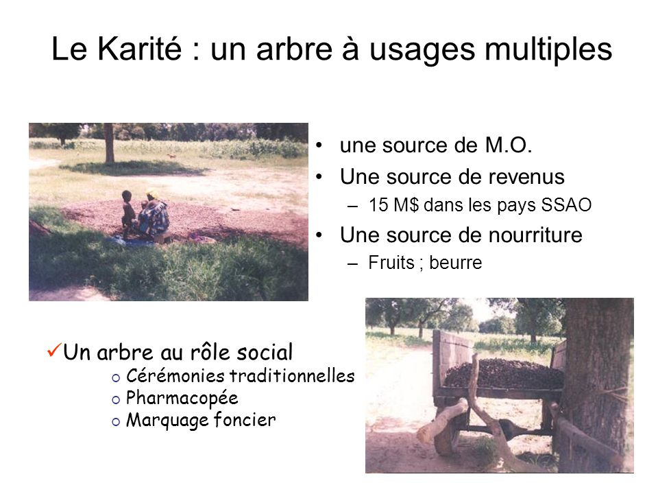 Le Karité : un arbre à usages multiples