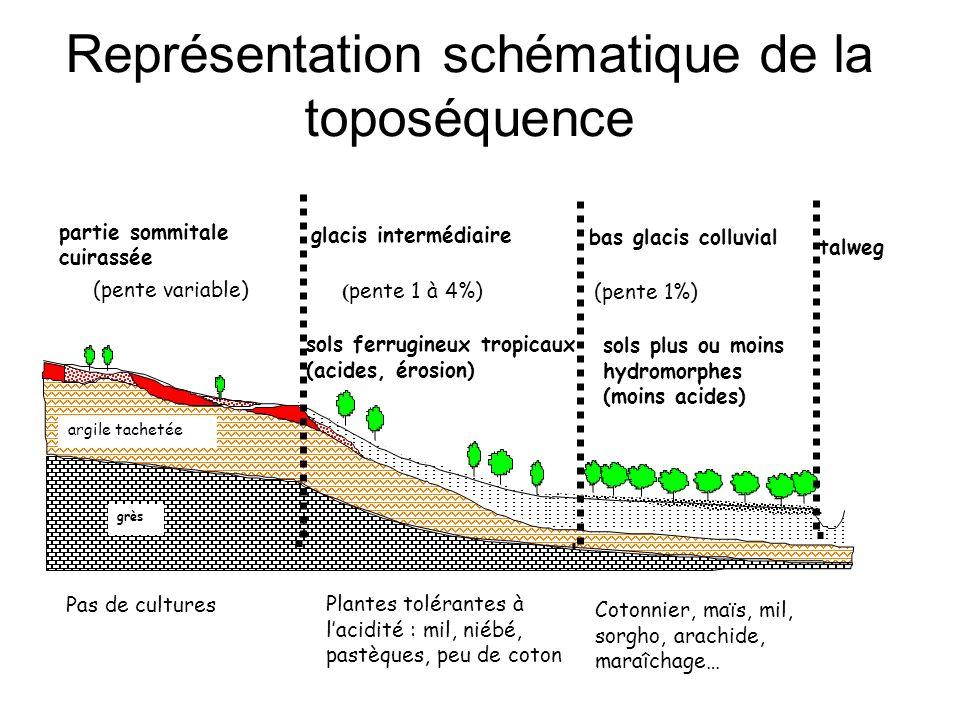 Représentation schématique de la toposéquence