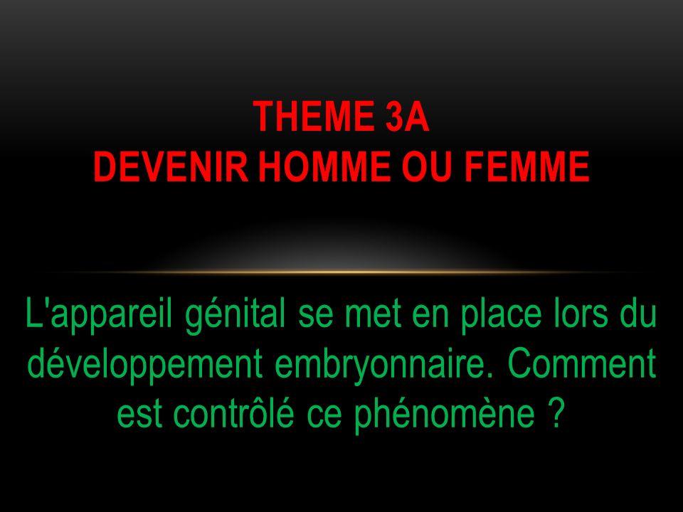 THEME 3A DEVENIR HOMME OU FEMME