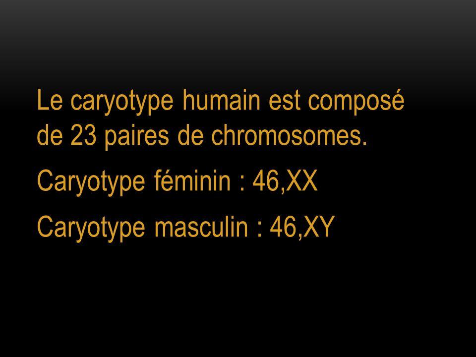 Le caryotype humain est composé de 23 paires de chromosomes.