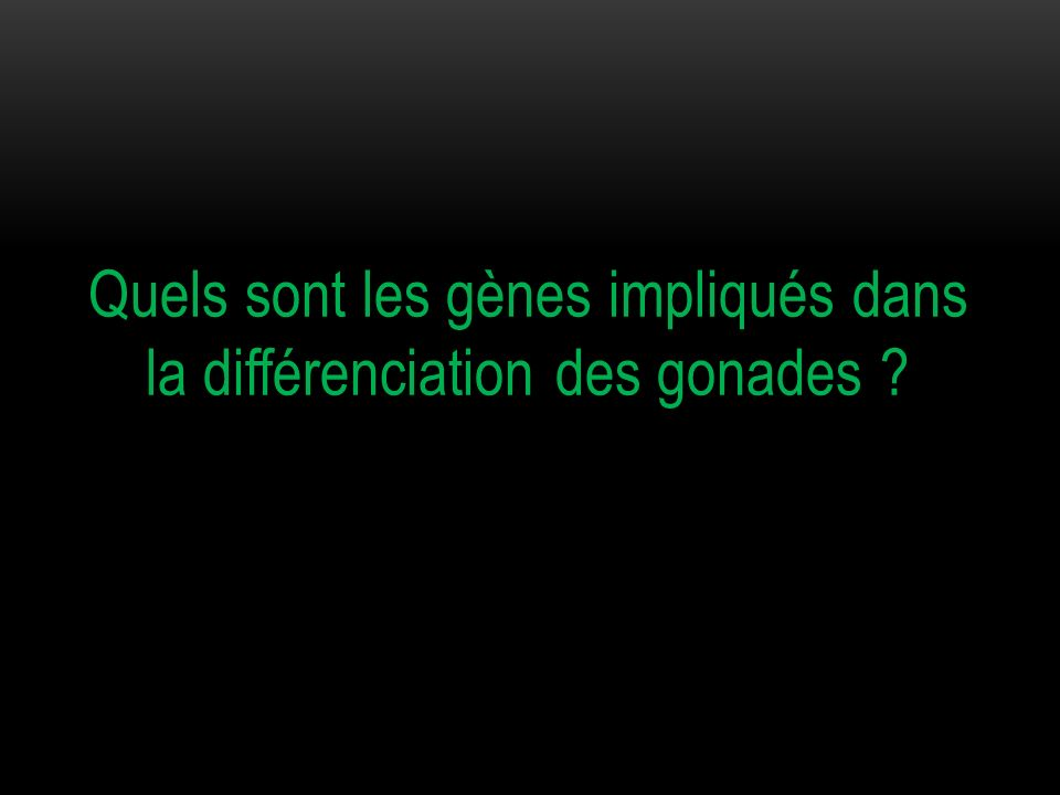 Quels sont les gènes impliqués dans la différenciation des gonades