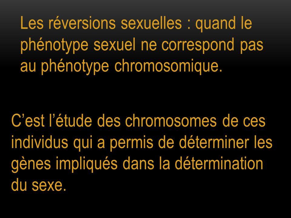Les réversions sexuelles : quand le phénotype sexuel ne correspond pas au phénotype chromosomique.