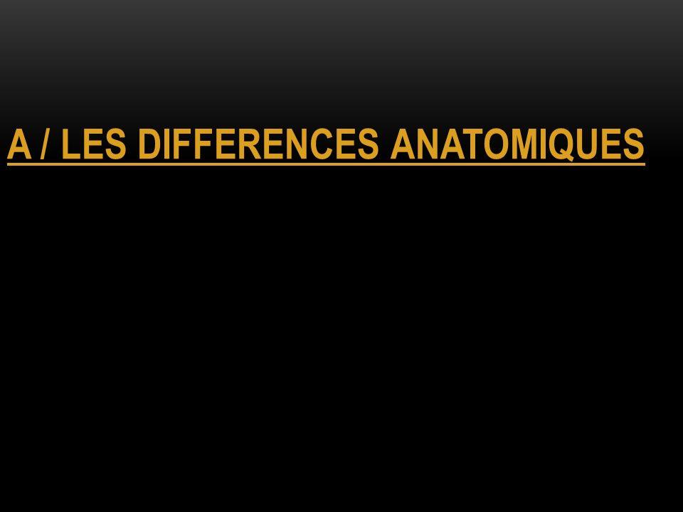 A / LES DIFFERENCES ANATOMIQUES
