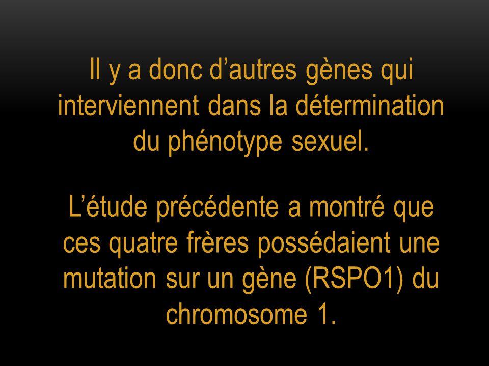 Il y a donc d'autres gènes qui interviennent dans la détermination du phénotype sexuel.
