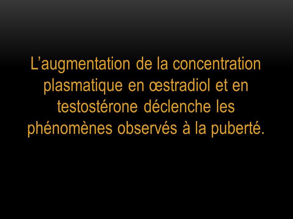 L'augmentation de la concentration plasmatique en œstradiol et en testostérone déclenche les phénomènes observés à la puberté.