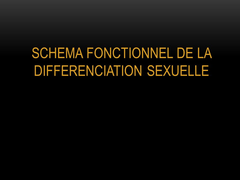 SCHEMA FONCTIONNEL DE LA DIFFERENCIATION SEXUELLE