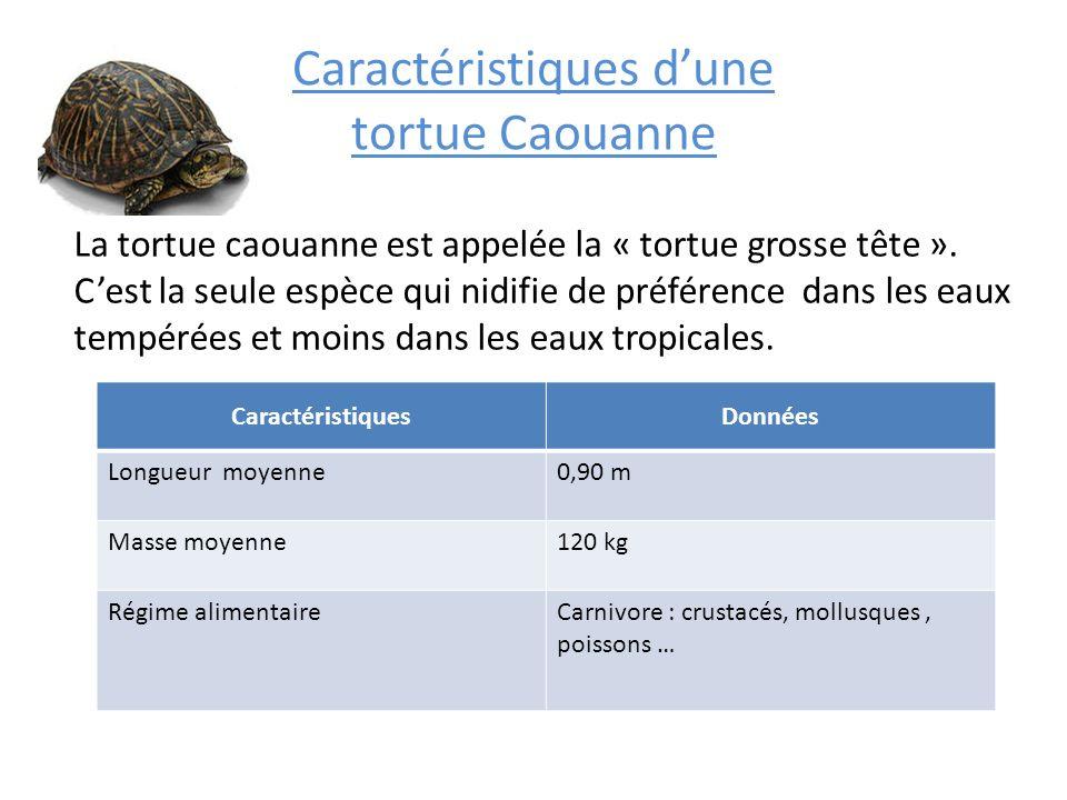 Caractéristiques d'une tortue Caouanne