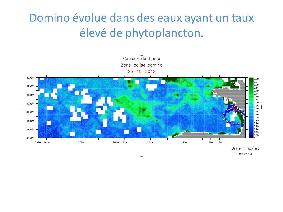 Domino évolue dans des eaux ayant un taux élevé de phytoplancton.