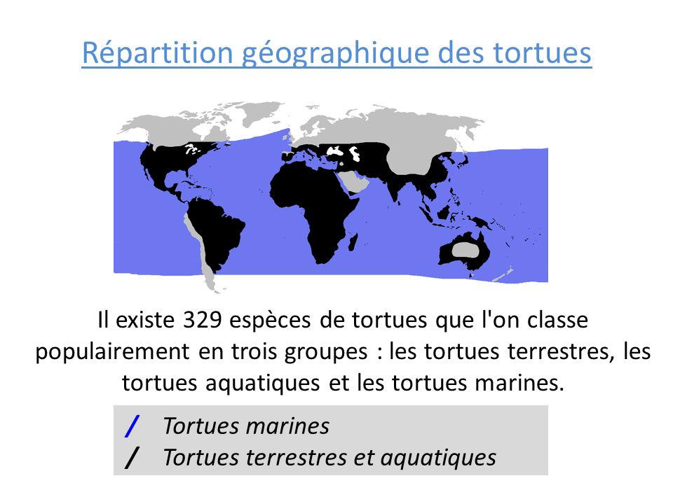Répartition géographique des tortues