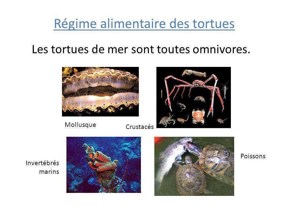 Régime alimentaire des tortues