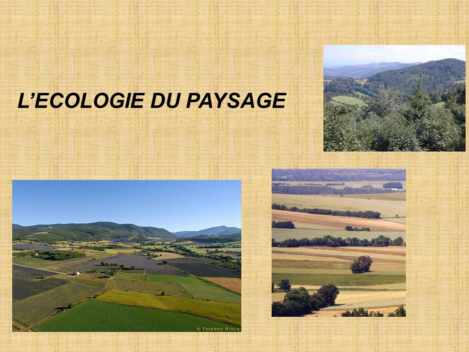 L'ECOLOGIE DU PAYSAGE
