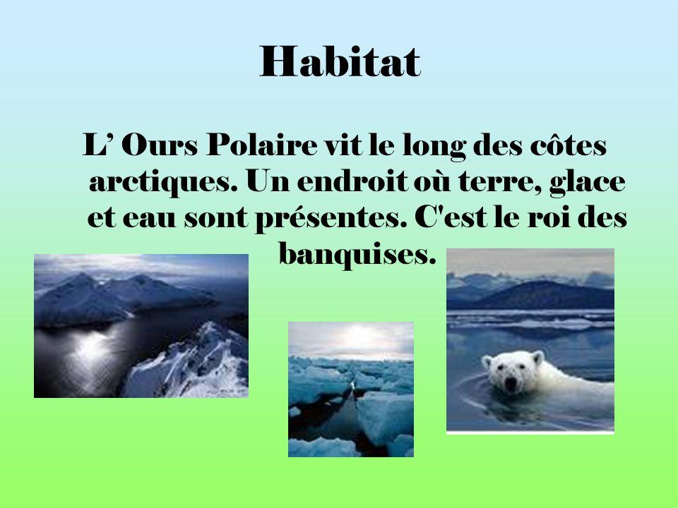 Habitat L' Ours Polaire vit le long des côtes arctiques.