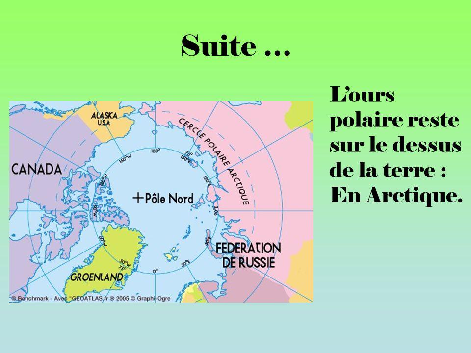Suite … L'ours polaire reste sur le dessus de la terre : En Arctique.