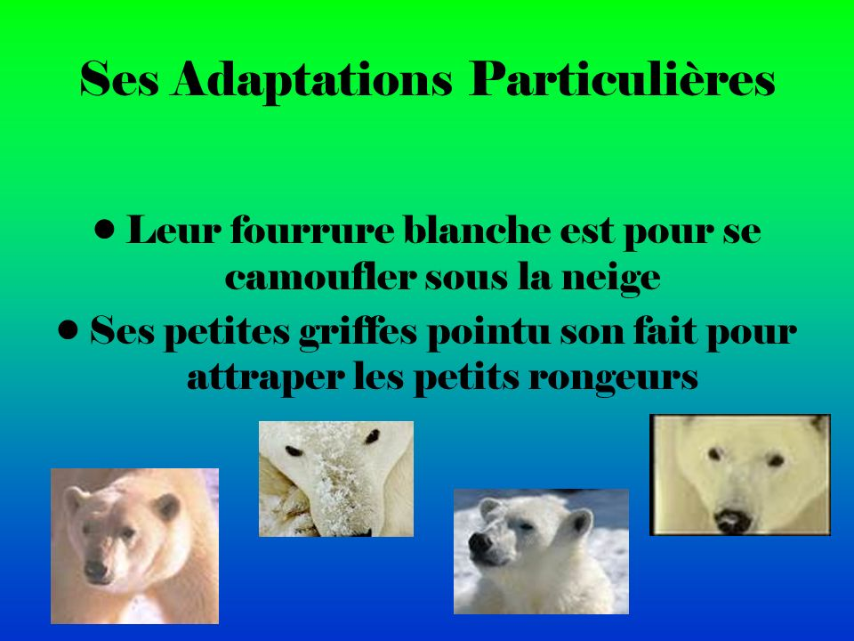 Ses Adaptations Particulières